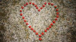 Herz - Zitate zur Liebe