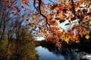 Herbstwald - Zitate zum Nachdenken